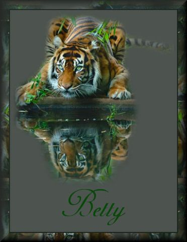 Tiger ReflectionBetty
