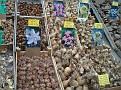 Bloemenmarkt (6)