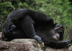 Singapore Zoo Parks 10