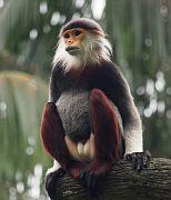 Singapore Zoo Parks 12