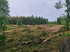 Der Fichtenwald auf dem Hettberg :-(