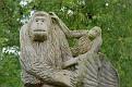A Gorilla Welcome To Bristol Zoo Gardens