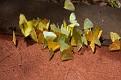 Butterflies, Iguazu