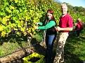 Grape Picking at Natali's Vineyard 10-21-09 (14)