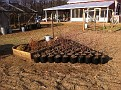 "We are ""Potted"" :-). 60 Beach Plum Plants.  Have a nice winter ;-)"