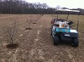 Top Dressing the 200 Beach Plum Plants and Officially putting them to bed for the winter.