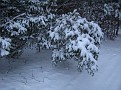 Snow Storm 1-30-2010 (6)