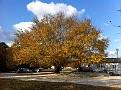 Friday November 11, 2011. Autumn Beauty ;-)